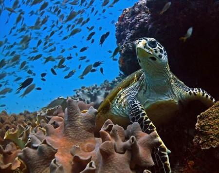 Очаровательный подводный мир.