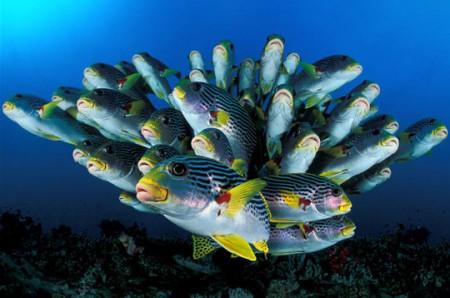 Очарование подводного Мира.