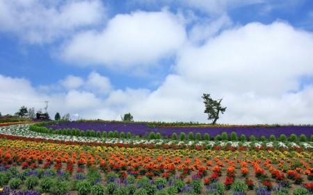 Японское великолепие красок природы.
