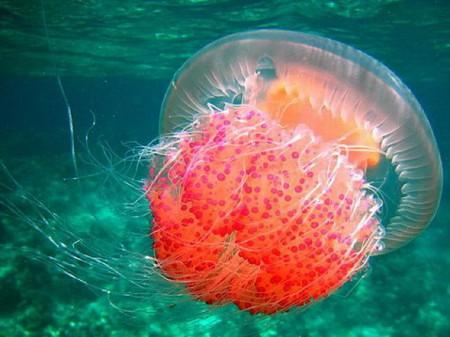 Прекрасный подводный Мир.