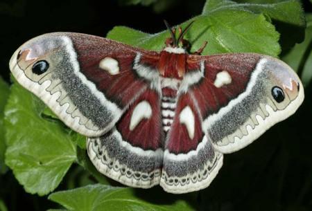 Красивейшие бабочки Земли.