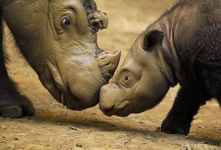 Неисследованные животные.